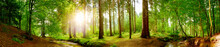 Panorama Vom Wald Im Frühling.