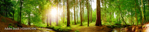 Panorama lasu na wiosnę z jasnym słońcem promieniejącym przez drzewa