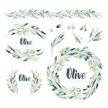 Watercolor Olive Branch. Sketc...