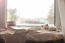 Kitten On A Warm Knitted Sweat...