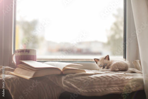 Fotomural Kitten on a warm knitted sweater on the window sill