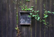 Old Metal Mailbox On A Black Wooden Fence With Wild Plants Grown Around.