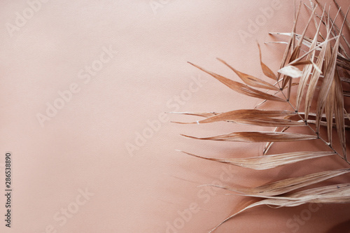 Fotografija Tropical dry leaves on pink background. Closeup view
