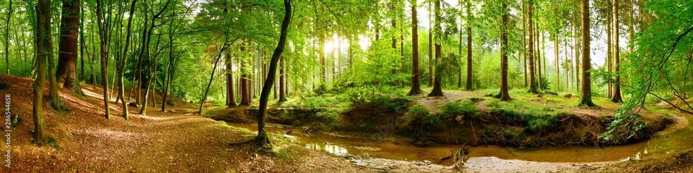 Fototapety, obrazy: Idyllisches Waldpanorama mit grünen Bäumen und hellem Sonnenlicht im Hintergrund