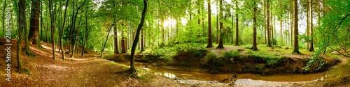 Idylliczna leśna panorama z zielonymi drzewami i jasnym światłem słonecznym w tle