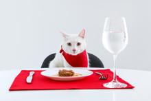 Cute Cat Sitting At Served Din...