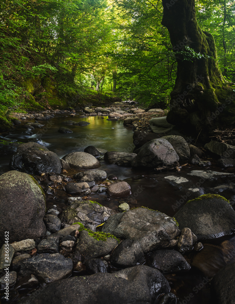 Fototapety, obrazy: Small river and mossy rocks in a green forest. Peaceful landscape scene.