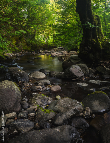 Door stickers Forest river Small river and mossy rocks in a green forest. Peaceful landscape scene.