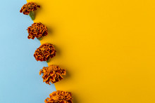 Floral Pattern Of Marigold Flowers On The Blue And Yellow Background