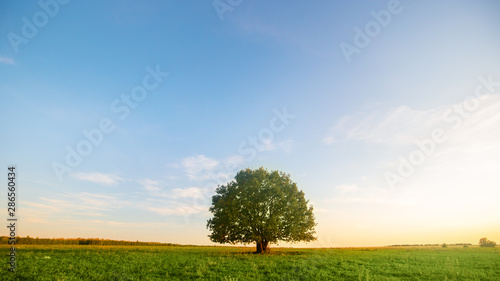 Foto auf Gartenposter Baume Lonely green oak tree in the field