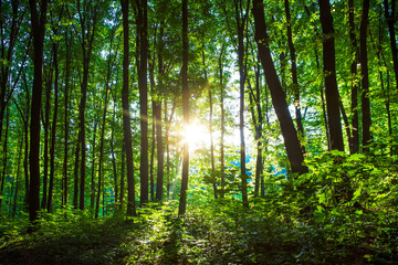 Forest trees. nature green wood sunlight backgrounds..