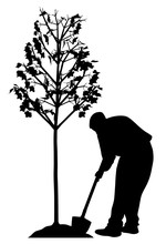 Young Man Planting A Tree