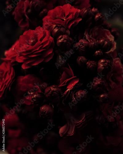 In de dag Retro red rose on black background