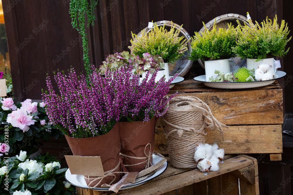 Obraz Pink heather or myrtle flowers in shop fototapeta, plakat