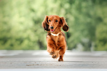 Beautiful Dog Portrait Breed ...