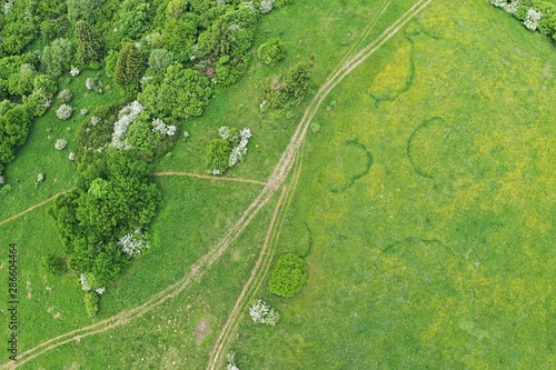 Fotografie, Tablou  Aerial view of dirt road, group of broadleaf trees and grassland with interesting, round and kidney shaped grass patterns