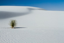 A Yucca Plant Amid The Vast Ex...