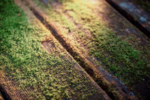 Wooden Table With Moss In Sunl...
