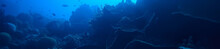Under Water Ocean / Landscape Underwater World, Scene Blue Idyll Nature