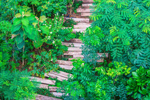 Tropical Forsest With Recycled Wooden Railway Sleepers Used To Make The Pathway In Green Garden, Top View.