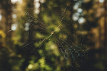 Spider Sits On A Web Waiting For A Victim