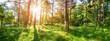 Leinwanddruck Bild - pine trees in morning light