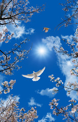 Fototapeta3d sky and bird wallpaper background