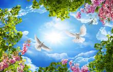 3d Sky And Bird Wallpaper Background
