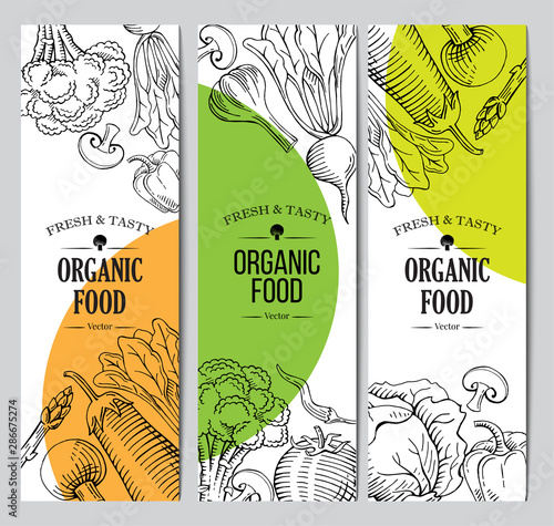 organic vegetarian food banner, roll up standee design template, hand drawn illustration template