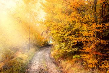 Fototapeta Inspiracje na jesień Sunny Autumn Road in golden forest, beautiful fall season