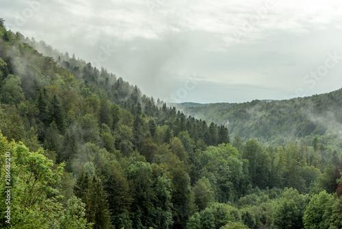 La pose en embrasure Kaki Paysage forestier dans le Jura