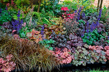 The Planted Border With Mixed ...