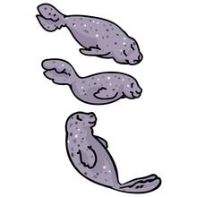 Cute Group Of Light Grey Seals...