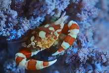 Crab Underwater Photo / Small Crab, Underwater Scene