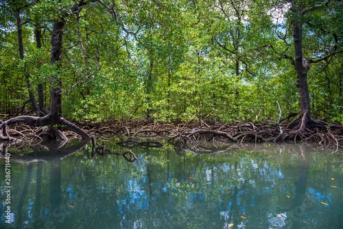 Fotomural Scenic seaside view of tranquil mangrove swamp landscape on the coast of Bahia,
