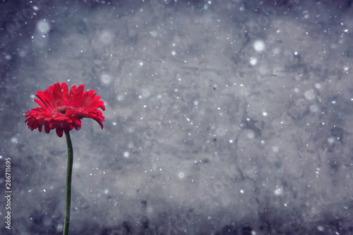 Foto auf Gartenposter Logo red gerbera flower / red beautiful summer flower, aroma smell concept