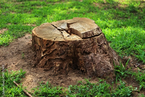 Tree stump in the forest 02 Canvas Print