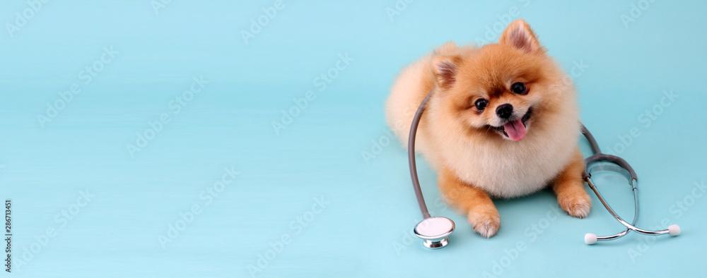 Śliczny mały pomeranian pies z stetoskopem jako weterynarz na błękitnym tle. <span>plik: #286713451 | autor: Justinboat29</span>