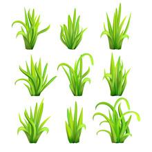 Green Grass Tufts
