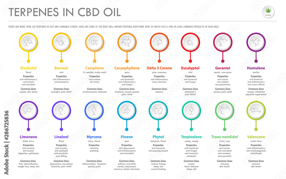 Fototapety, obrazy: Terpenes in CBD Oil with Structural Formulas horizontal business infographic illustration about cannabis as herbal alternative medicine and chemical therapy, healthcare and medical science vector.