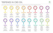 Terpenes In CBD Oil With Struc...