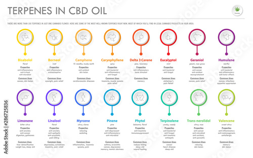 Photo Terpenes in CBD Oil with Structural Formulas horizontal business infographic illustration about cannabis as herbal alternative medicine and chemical therapy, healthcare and medical science vector
