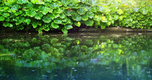 Wild Pond Surrounded By Green ...