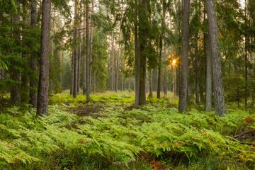 Panel Szklany Las Forrest - Forest Knyszyn (Poland)