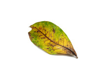 Yellow Leaves Isolated On Whit...