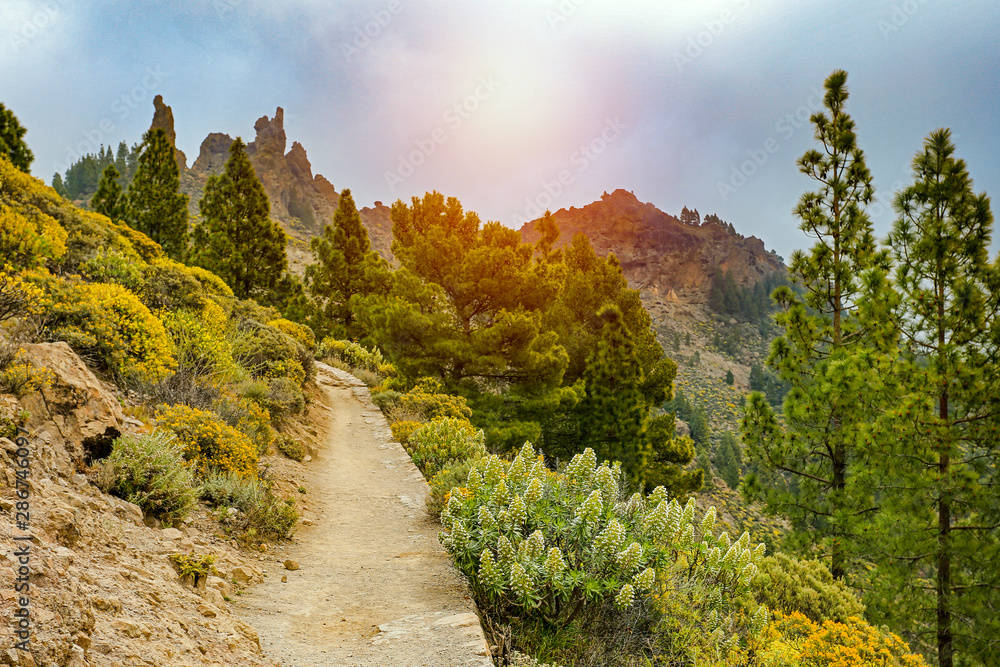Fototapety, obrazy: Road in the mountains with the beautiful sunset view.