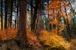 Glowing autumn leaves