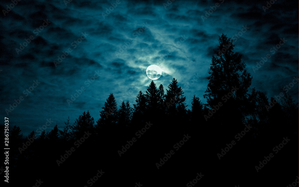 Fototapeta Night mysterious landscape in cold tones - silhouettes of forest trees under the full moon through the clouds on dramatic night sky.