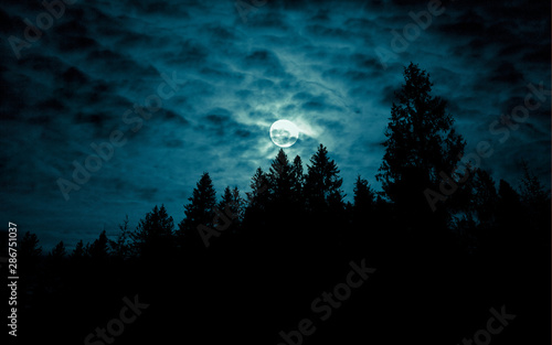Obraz Night mysterious landscape in cold tones - silhouettes of forest trees under the full moon through the clouds on dramatic night sky. - fototapety do salonu