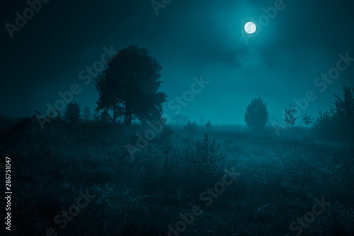 Photo Stands Green blue Night mysterious landscape in cold tones - silhouettes of the trees under the full moon on dramatic night sky.